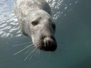 Seal3
